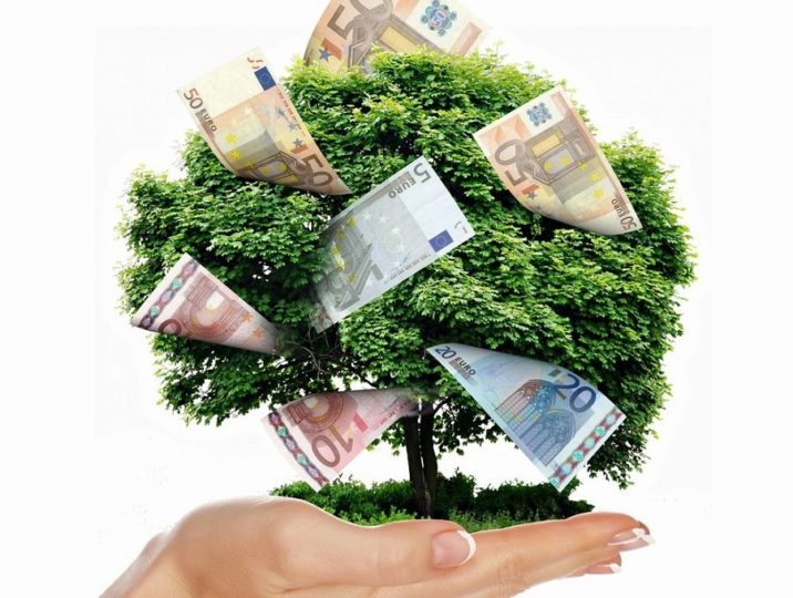 money-tree-2.jpg